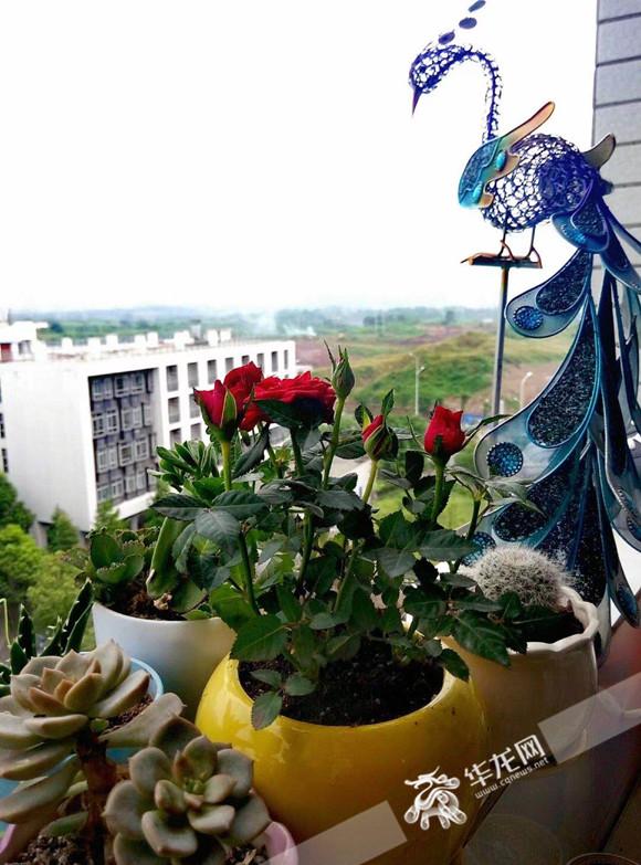 阳台上的绿植 受访者供图.jpg