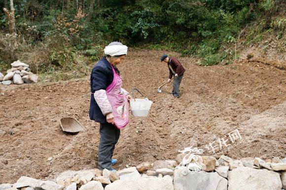 8、石柱中益乡,一户村民将自家的土地由种植苞谷改为种植前胡。记者 石涛 摄.jpg