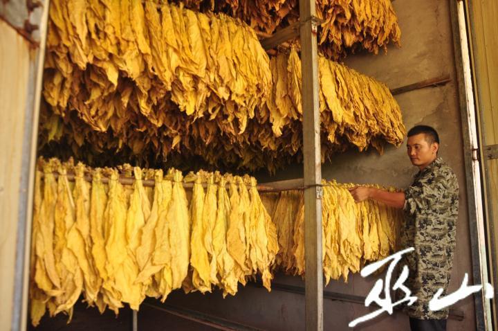 大坪村一烟农在查看烘烤的烟叶。记者 王忠虎 摄.jpg