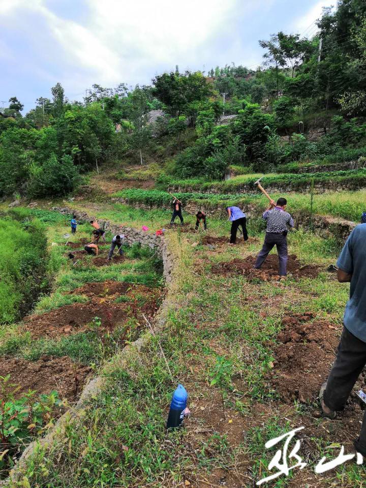 工人在栽植树木。.JPG