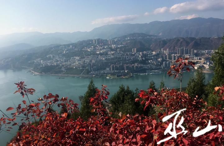11月23日,三峡红叶与巫山新城成为三峡新景观。卢先庆摄.JPG