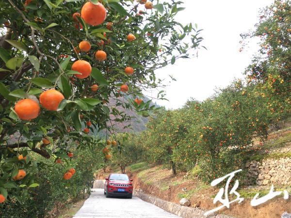 曲尺乡打造的水果种植基地。.JPG